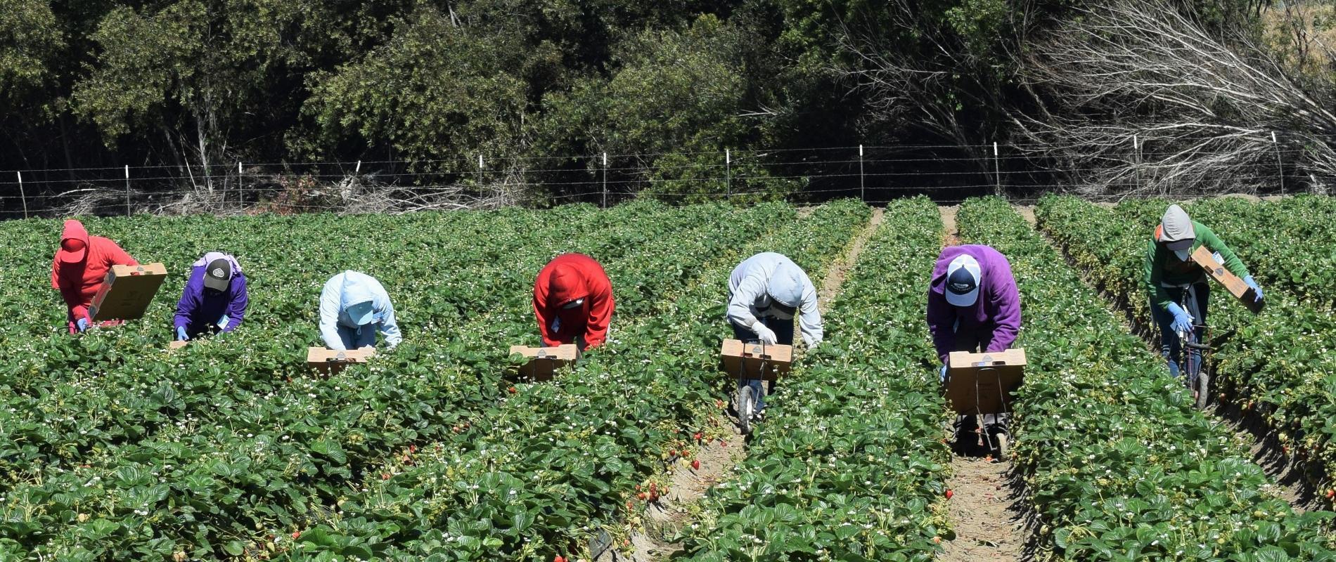 Des milliers de travailleurs marocains embauchés à l'étranger en 2019